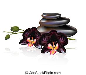 kiselstenar, svart, orchids., composition., kurort