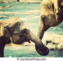 kissing Elephant love - kissing Elephant, represents love, ...
