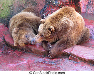 KissingGrizzlys - Kissing Grizzly Bears