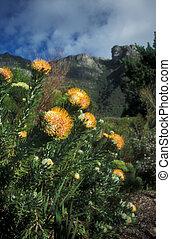 kistenbosch, botanical kert