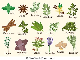 Kitchen condiment, herbs and spices - Herbs, condiment and ...
