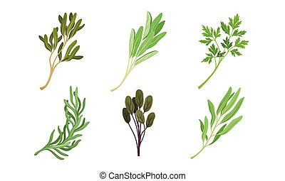Kitchen Herbs and Condiment with Parsley and Tarragon Vector...