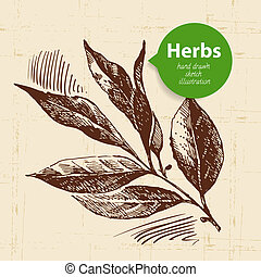 Kitchen herbs and spices. Vintage background with hand drawn sketch bay leaf