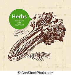 Kitchen herbs and spices. Vintage background with hand drawn sketch celery