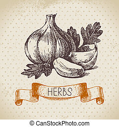 Kitchen herbs and spices. Vintage background with hand drawn sketch garlic