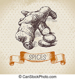 Kitchen herbs and spices. Vintage background with hand drawn sketch ginger
