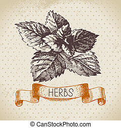 Kitchen herbs and spices. Vintage background with hand drawn sketch mint