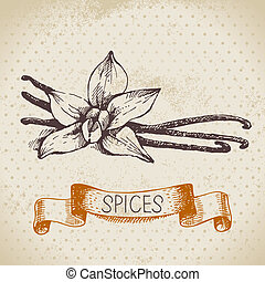 Kitchen herbs and spices. Vintage background with hand drawn sketch vanilla