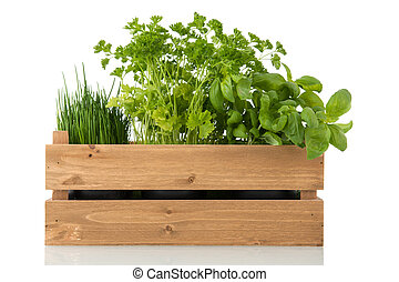 kitchen herbs in wooden crate isolated over white background