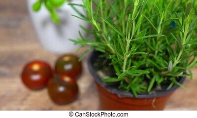kitchen., romarin, aromate, pot