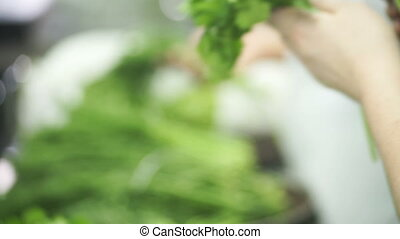 Kitchen workers choose fresh herbs and collect it in...