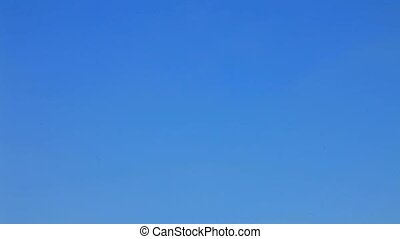 Kites Flying High in the Blue Sky