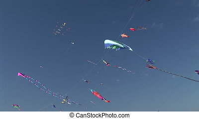 Kites Flying - Many kites flying in the sky at the Long...