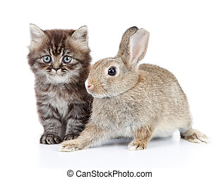 kitten and bunny - cat and rabbit isolated on white...