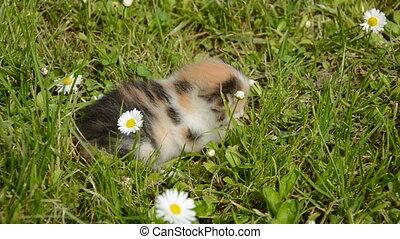 kitten and cat on garden grass