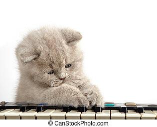 kitten and piano