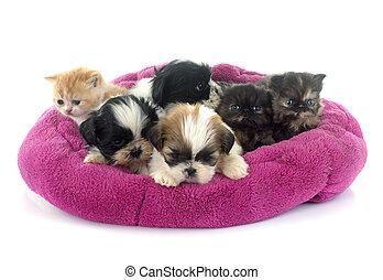 kitten and puppies