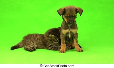 kitten and puppy are isolated on  green screen