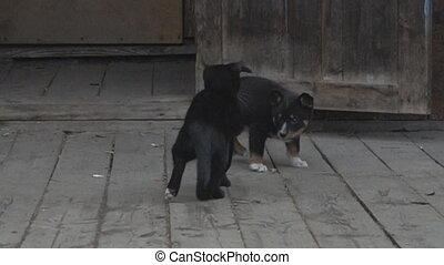 Kitten and puppy game. Village Pets. At a young age cats and dogs are not yet enemies, animal behavior, game young as a way of learning. Super slow motion 1000 fps