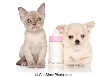 Kitten and puppy near baby bottle