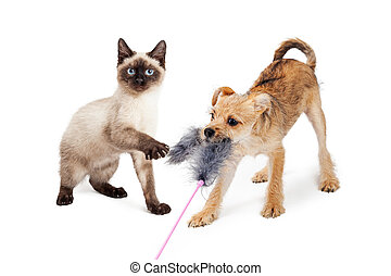 Kitten and Puppy Playing With Feather Toy