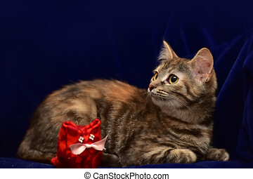 kitten and toy cat on a blue background