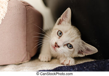 Kitten Cat Adorable Looking