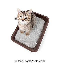 kitten cat in toilet tray box with litter top view isolated on white