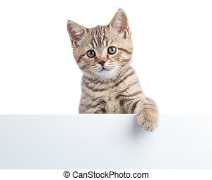 Kitten cat is over blank posterboard, you add the message.