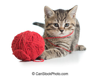 kitten cat playing clew ball isolated on white