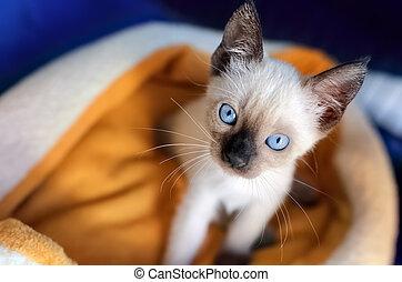 Kitten Cat Shelter Rescue