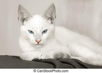 Kitten Cat White