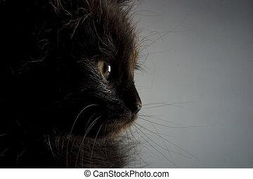Kitten - Cute black kitten on black background