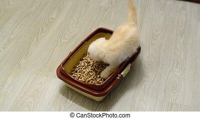 Kitten exploring wood filler in cat litter
