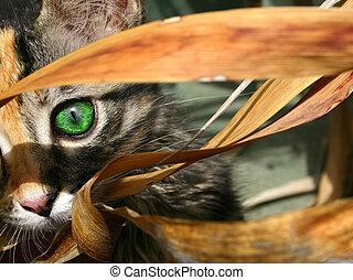 Kitten Eye - Kiten with foliage and green eye