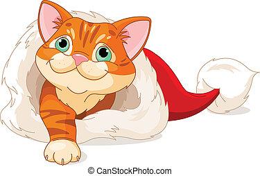 Kitten getting out from Santa Hat - Cute red kitten getting...
