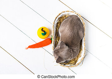 kitten gray breed, the Burmese is sitting in a wicker basket. Next toy crocheted in the form of fruit. wooden background.