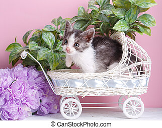 Kitten in a cradle on a background of purple flowers