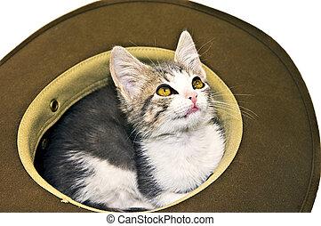 Kitten in a Hat Looking Up