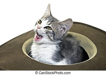 Kitten in a Hat Talking