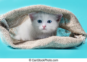 kitten in a sack turquoise background