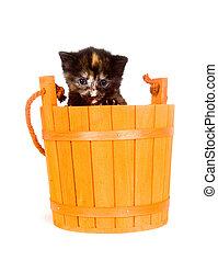 Kitten in an orange barrel