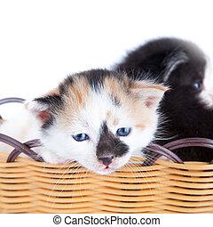 kitten in basket isolated on white