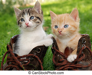 kitten in boots - couple of little kittens sitting in boots