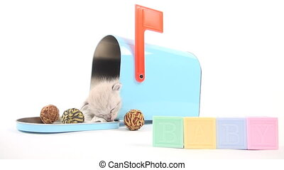 Cute baby kitten taking a nap inside of blue mailbox on white background