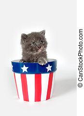 Kitten in patriotic flowerpot