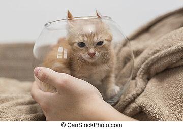 Kitten in the aquarium