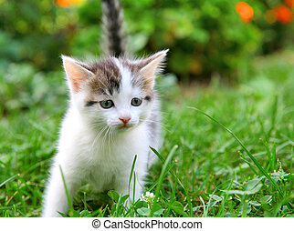 Kitten in the green grass
