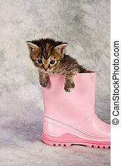 Kitten in water shoe
