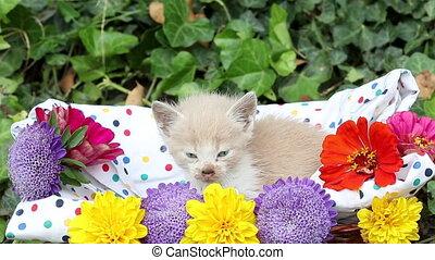 kitten in wicker basket